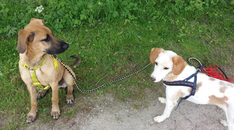 Zwei Hunde am Wandte-Wanderweg