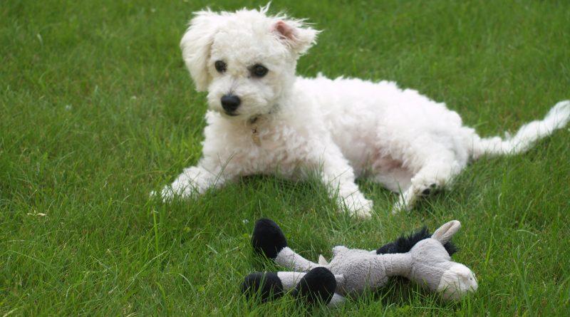 Hundehaltung ist nicht nachhaltig