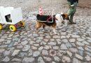 Hundmesse Gut Basthorst