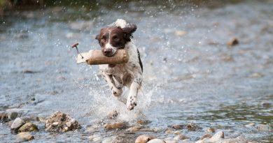 Hund springt aus dem Wasser