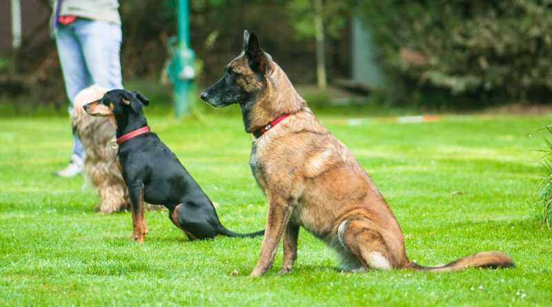 Hunde beim Obedience